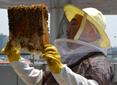 [더느린삶] Bee Happy 도시양봉가 되기