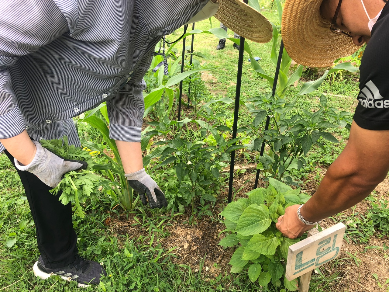 [온라인]도시농부워크숍 : 가을을 준비하는 시간