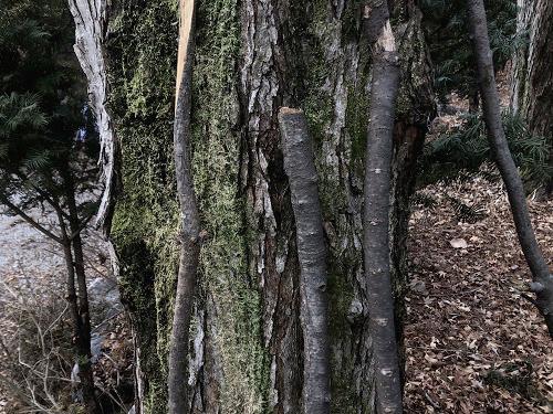 [온라인]깎아 만든 나무도감 - 모든 나무는 좋은 나무다