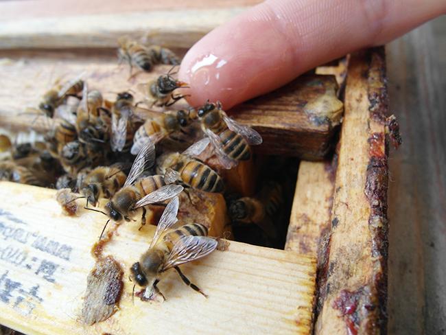 [도시양봉특강] 꿀벌의 세계