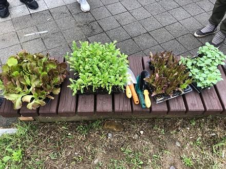 도시농부워크숍 : 계절을 이어가는 여름